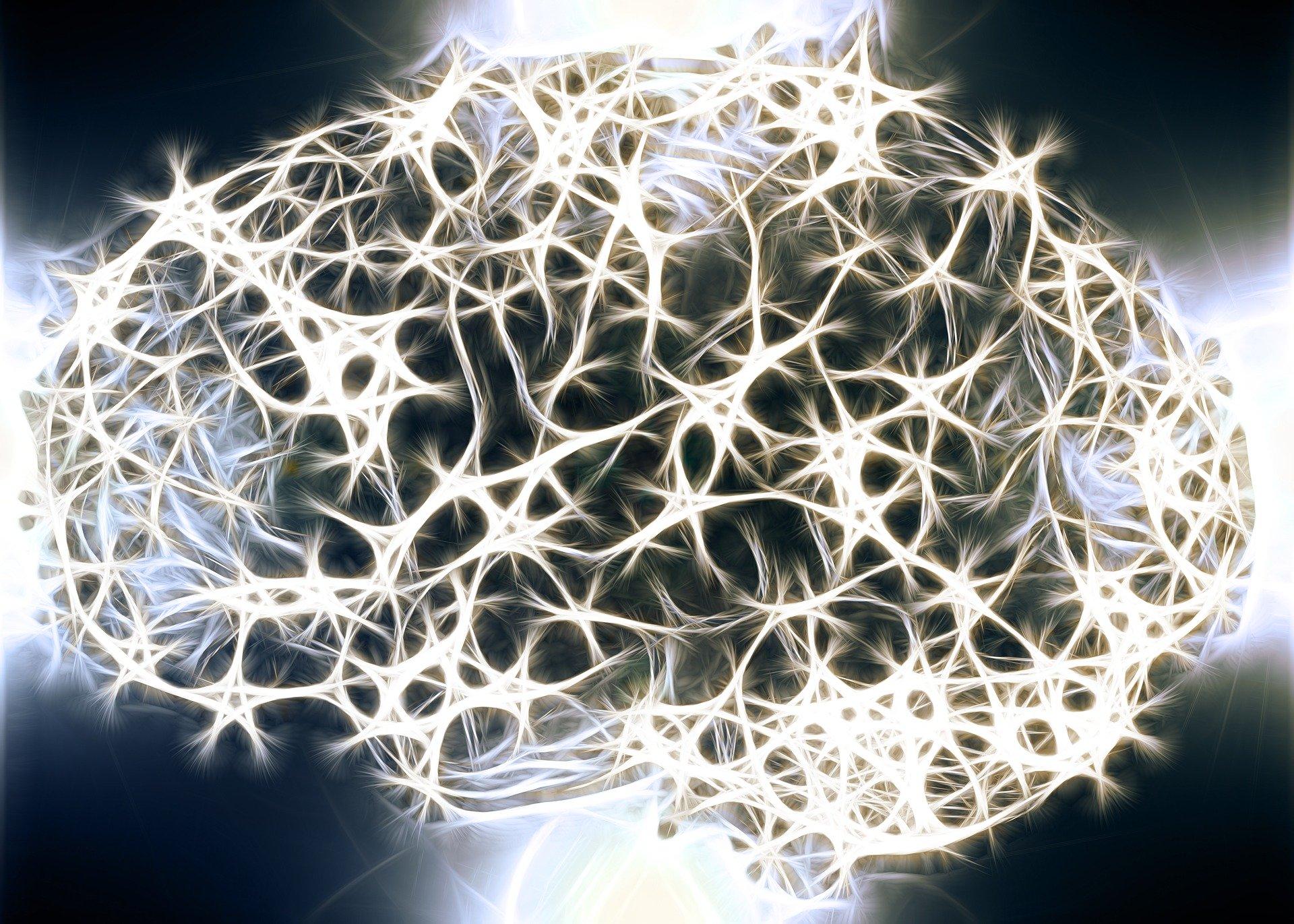 Recorrido cerebral